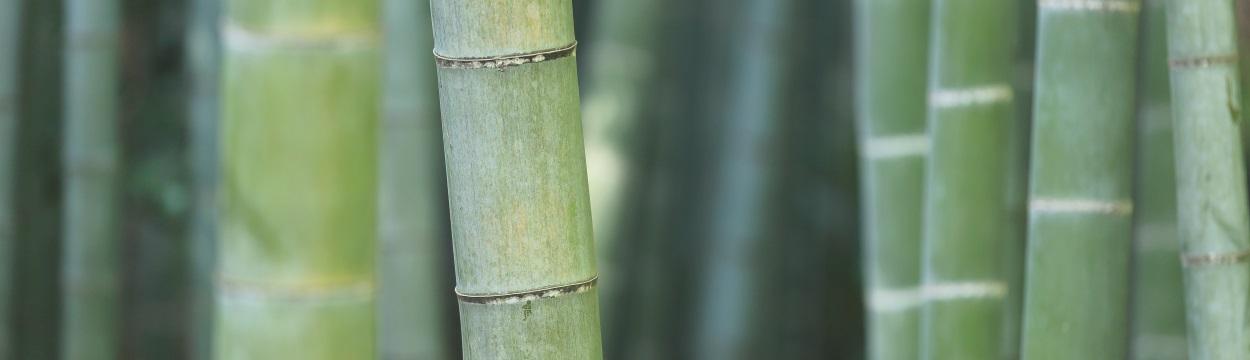 Bambus-Matratzen